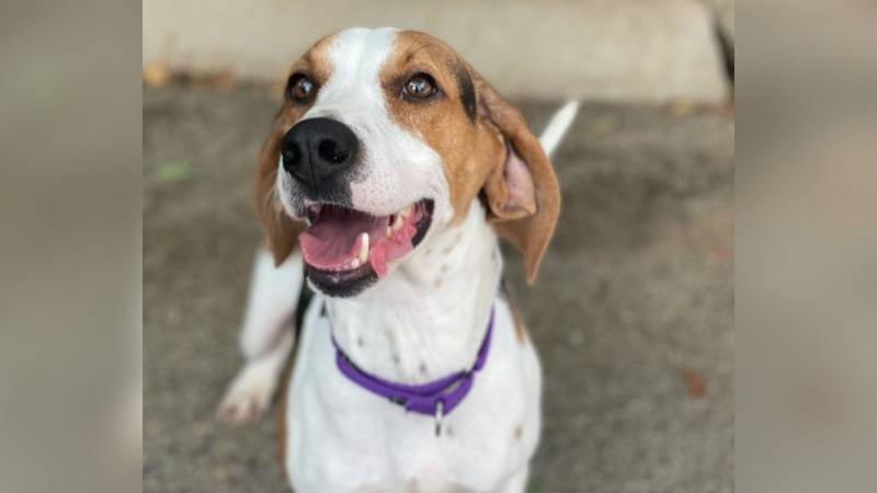 WVLT's pet of the month for July, Gracie