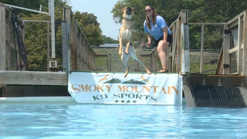 Dock Dogs are back at Village Green in Farragut