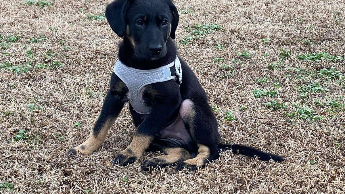 Puppy Calvin