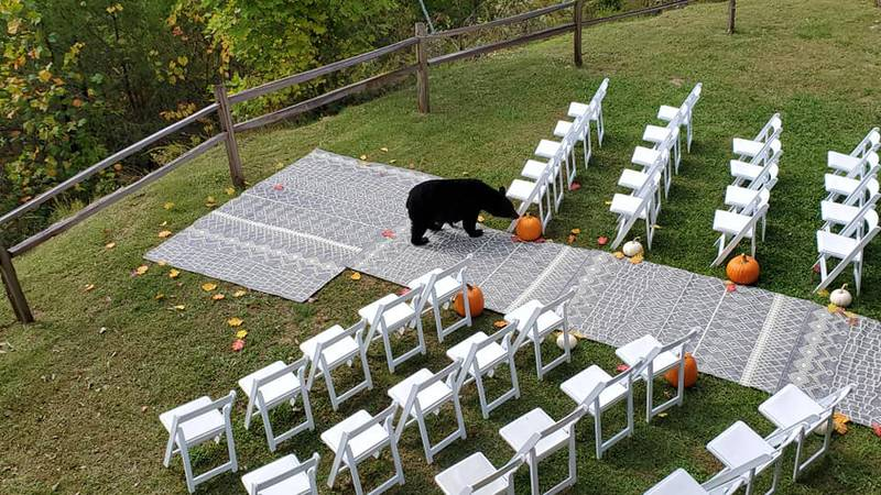 Three bears decided to crash a wedding in Wears Valley.