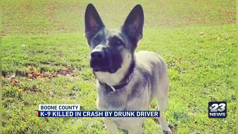 Boone County K9 killed by drunk driver early Sunday