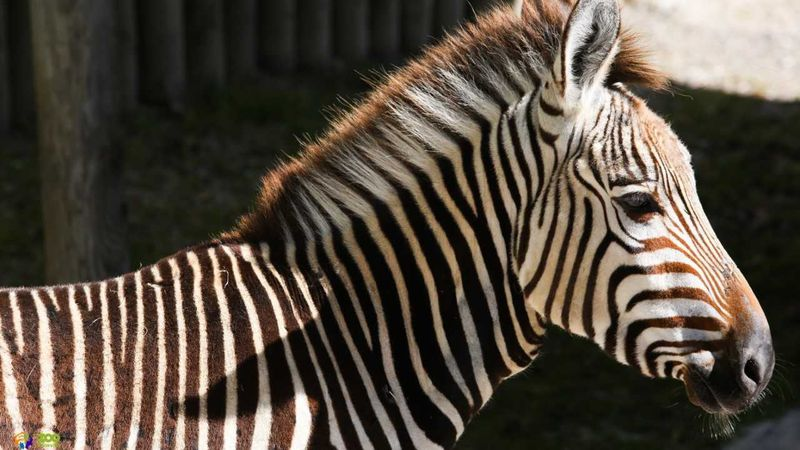 Photo courtesy of Zoo Knoxville