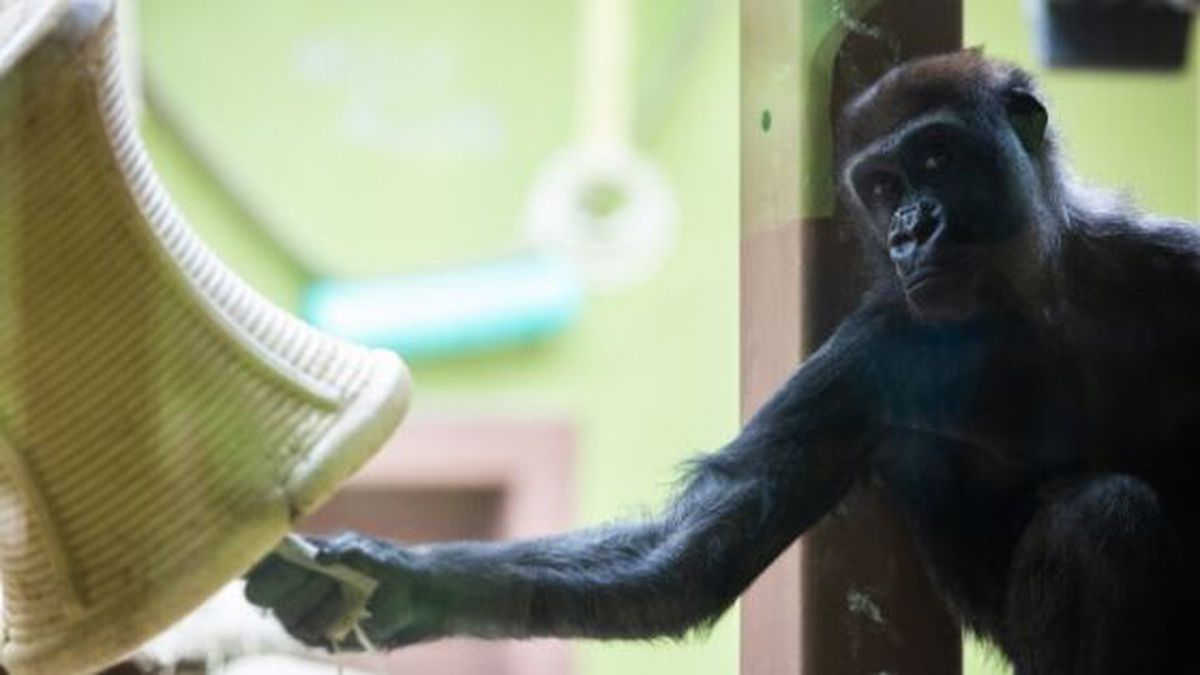 (Source: Zoo Knoxville)