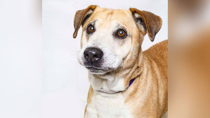 Ringo / Source: Young-Williams Animal Center