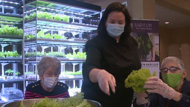 A hydroponic microfarm inspires interest from from residents dining at Commonwealth Senior...