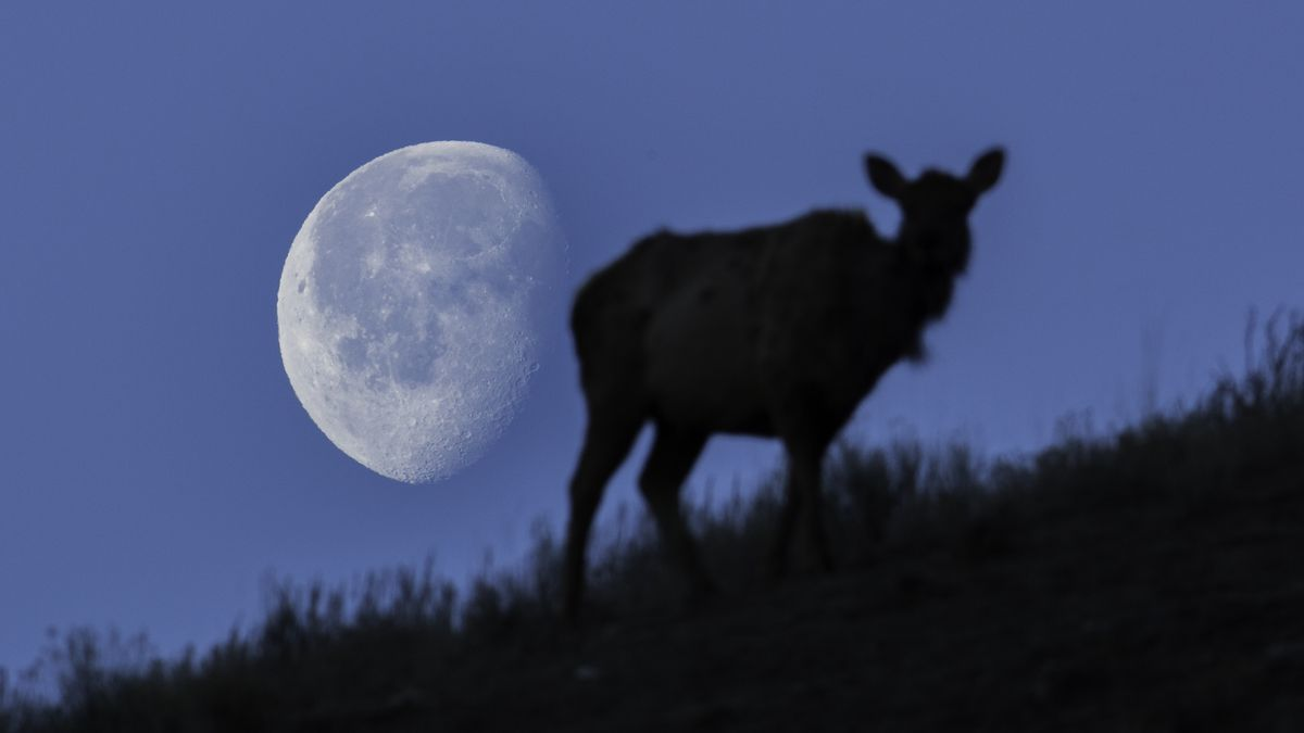 After the fireworks fly for Independence Day, the buck moon makes its debut early Sunday morning at 12:44 a.m. Eastern.