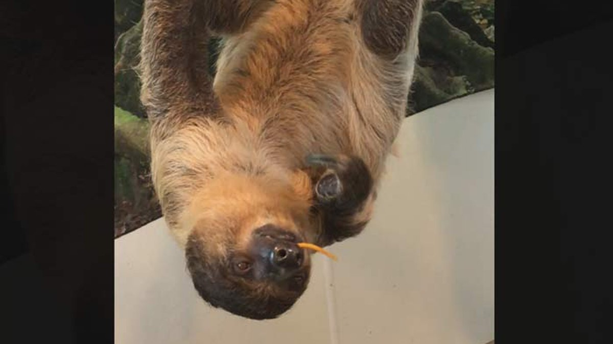 A lawsuit alleges a sloth at Charleston Sloth and Exotics, LLC, bit a child.