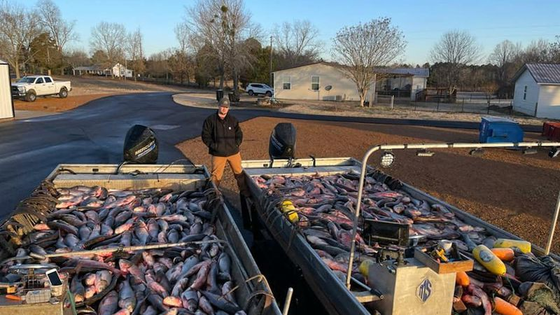 More than 20,000 pounds of carp caught in Kentucky Lake