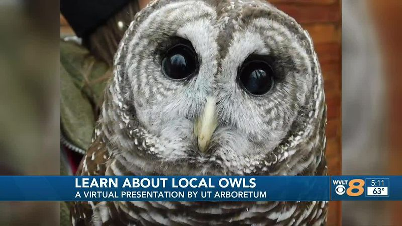 Learn about owls in East Tennessee
