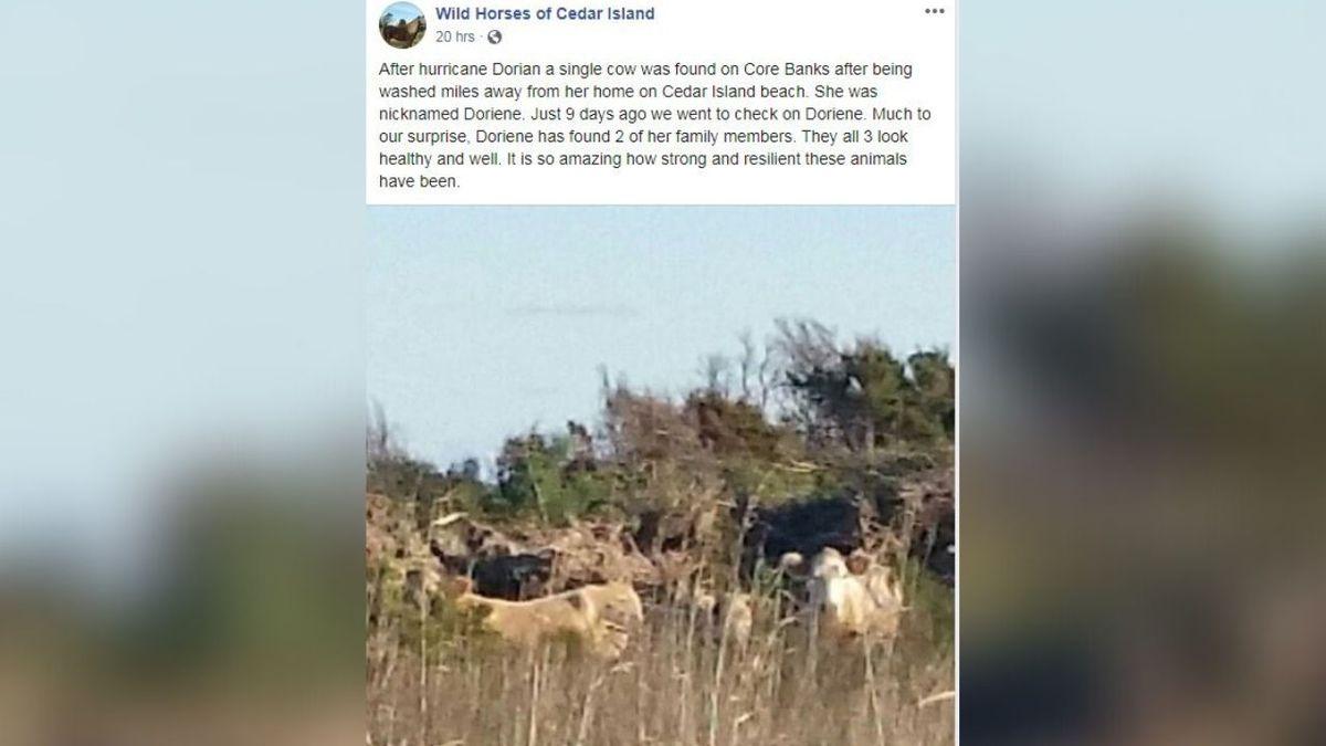 Source: Facebook/Wild Horses of Cedar Island