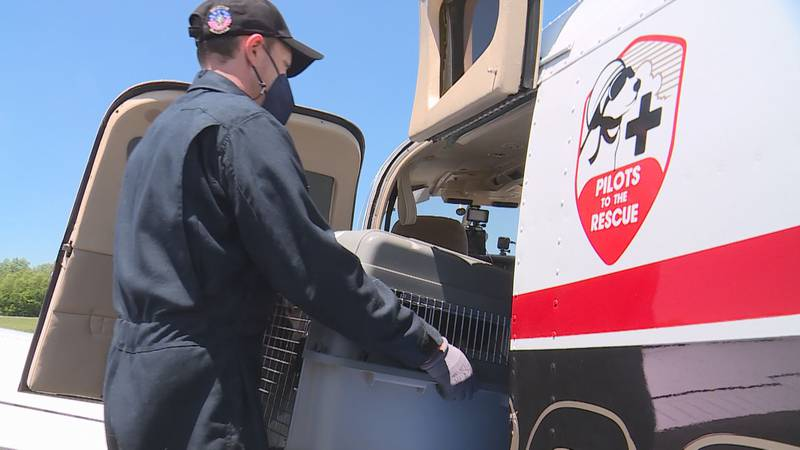 Pilots To The Rescue is a nonprofit based in New Jersey working to transport at-risk animals to...