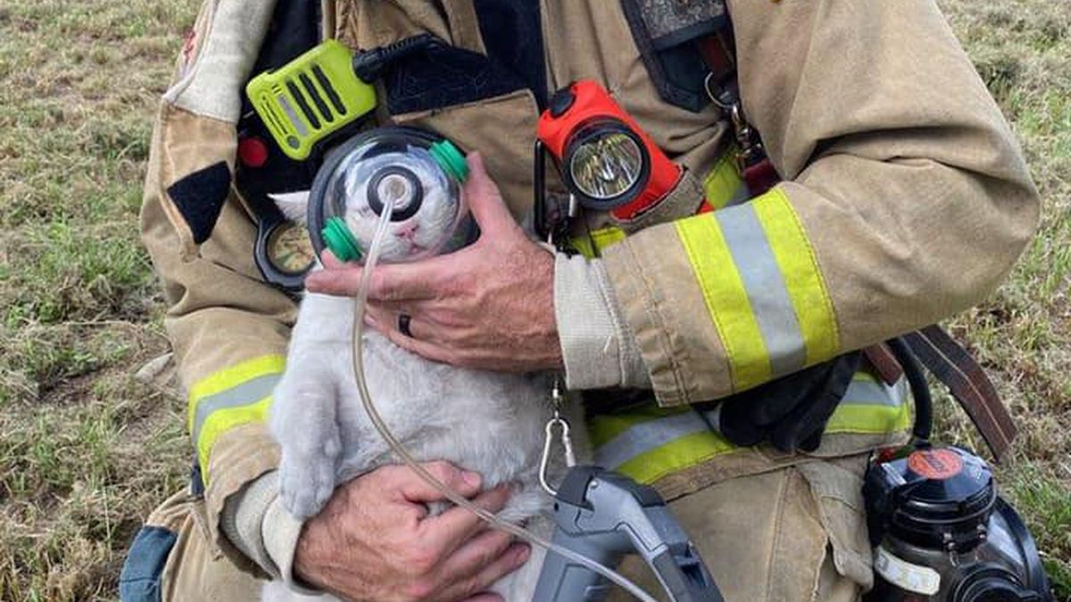 Four cats rescued from Florida house fire.