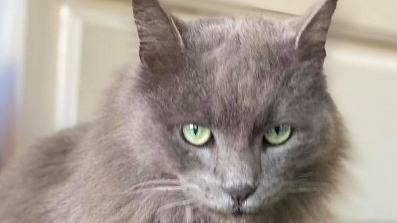 A cat that disappeared from her Knoxville home nearly four years ago, mysteriously reappeared,...