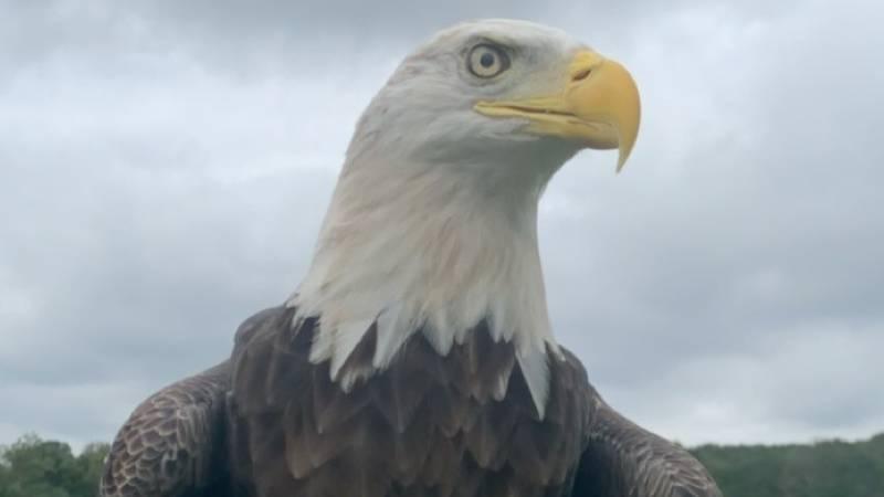 Largest bird rehabilitation center to be built
