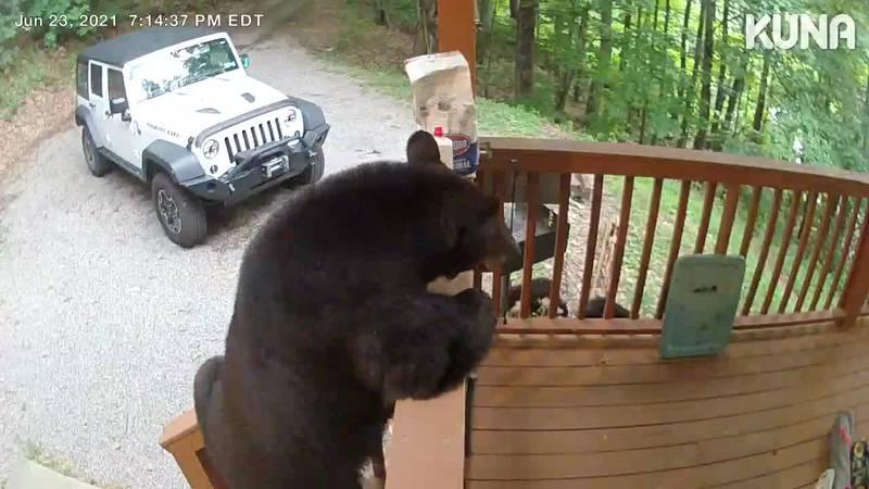 mama bear climbing on Gatlinburg porch