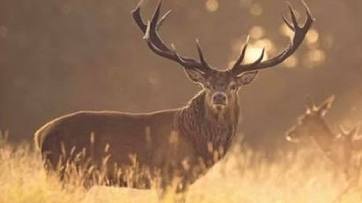 $5,000 reward for information that leads to the arrest and conviction of the person who killed the deer.