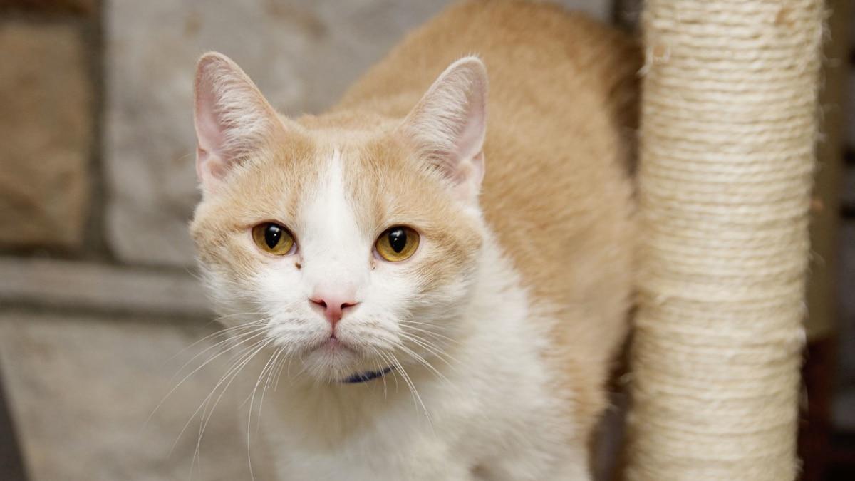 Meet WVLT's October senior pet of the month, Lucas!