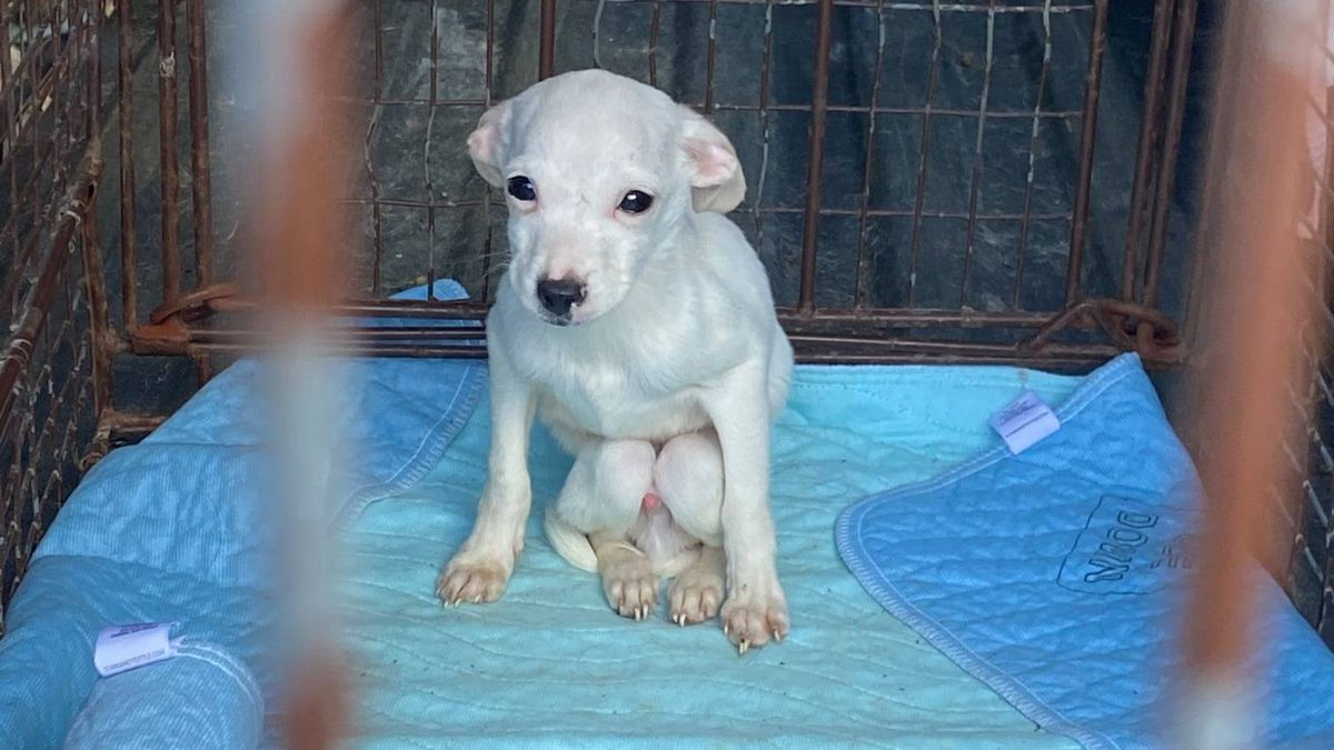 """The shelter said 45 dogs """"were voluntarily surrendered"""" from a home in the area. Seven other..."""
