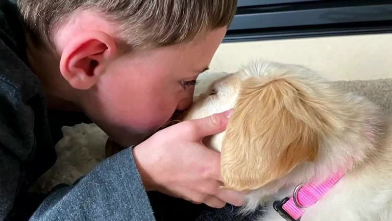 A young amputee forms a special bond with a golden retriever puppy who is missing his right paw.