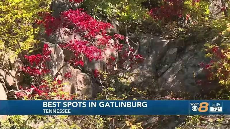 Leaf drop has started at Newfound Gap.